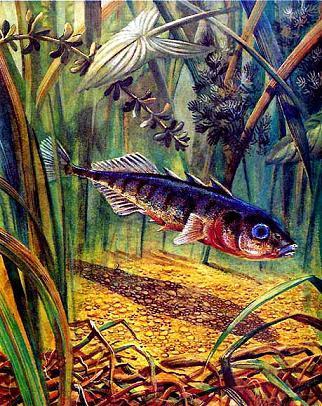 скачать игру рыбий дом бесплатно